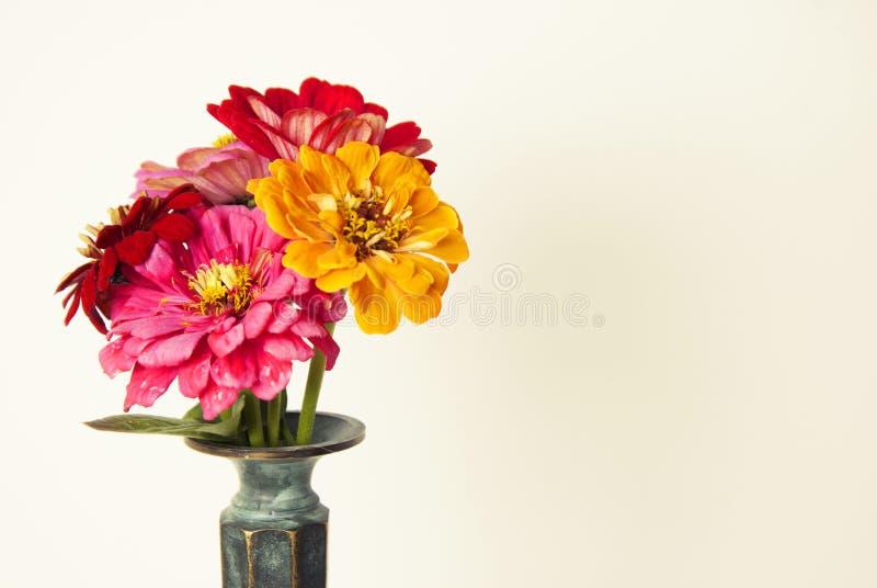 Buketten av den rosa zinniaen blommar i en isolerad vas inomhus kopiera avstånd arkivbild