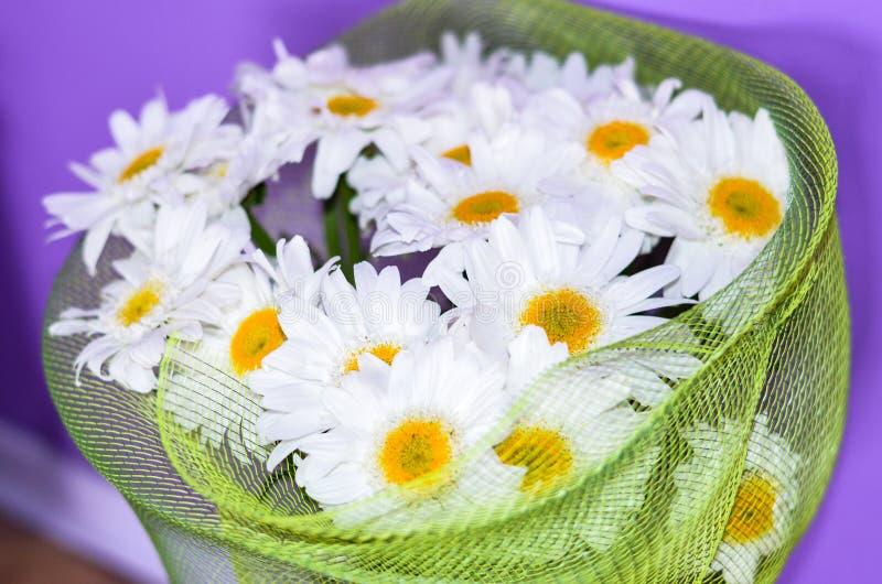 Buketten av den vita tusenskönan blommar på en orange bakgrund royaltyfri bild