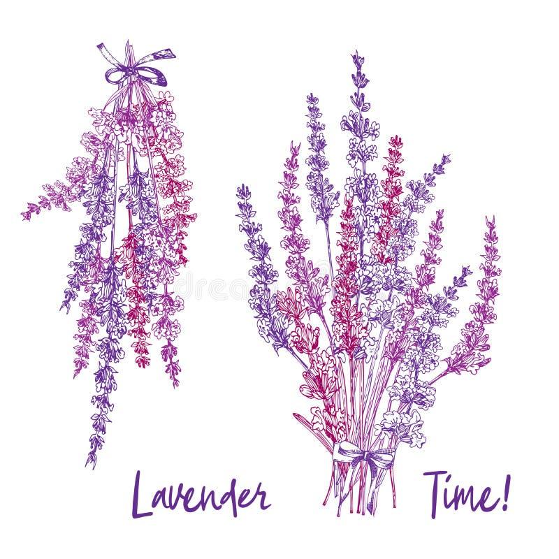 Buketten av handen dragen färg skissar av lavendelblomman och gulliga pilbågar som isoleras på grå bakgrund Frankrike provence re royaltyfri illustrationer