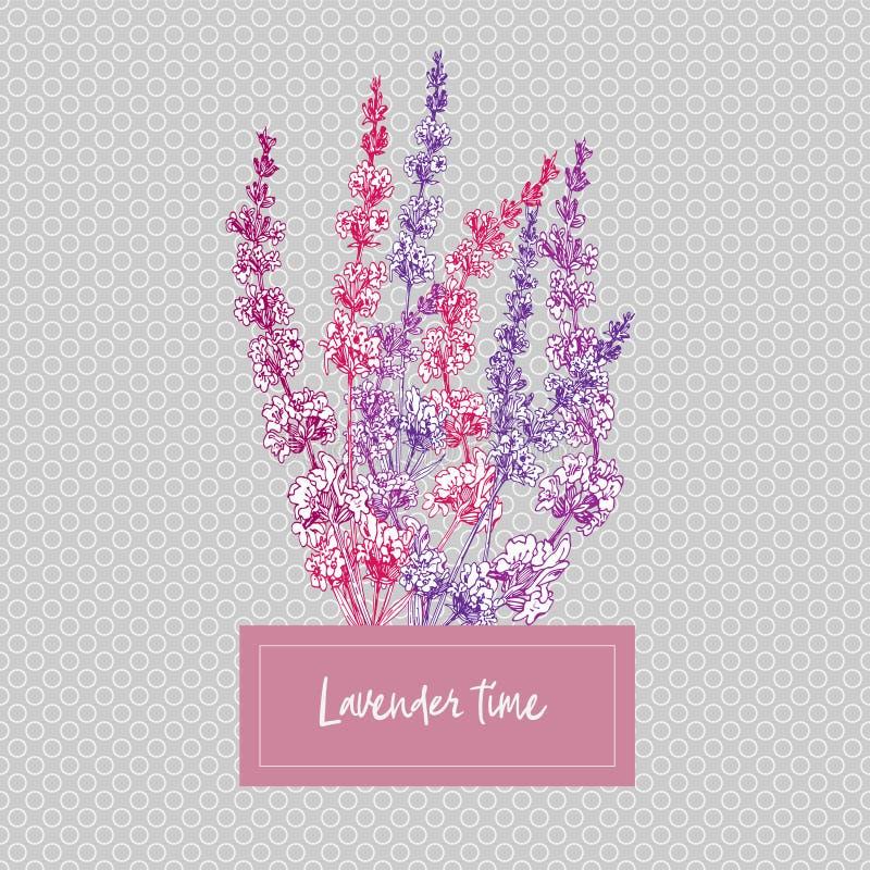 Buketten av handen dragen färg skissar av lavendelblomman och gulliga pilbågar som isoleras på grå bakgrund Frankrike provence re vektor illustrationer