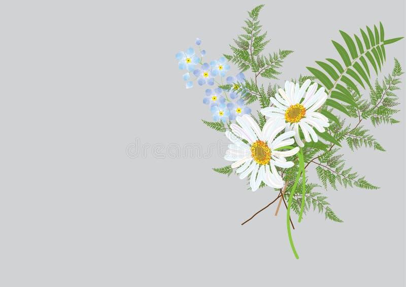 Buketten av tusenskönablommor med ormbunken lämnar den isolerade teckningen royaltyfri illustrationer