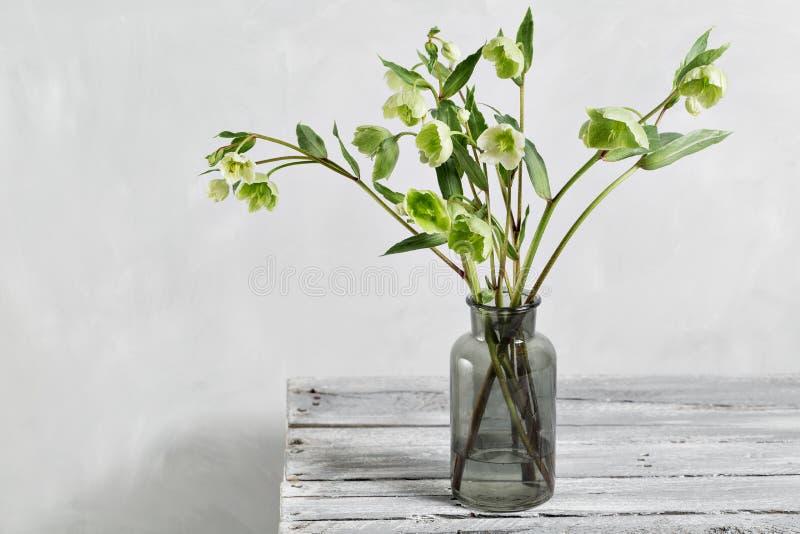 Buketten av vårhelleboren blommar i en vas Blom- stilleben för vår med helleborusblommor Hem- naturlig garnering royaltyfria bilder