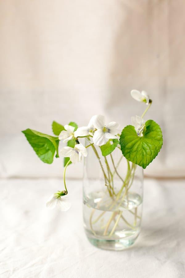 Buketten av whitebells blommar i en glass vas Snödroppevioletstilleben Blom- garnering Vår och minsta slut för sommartid arkivfoton
