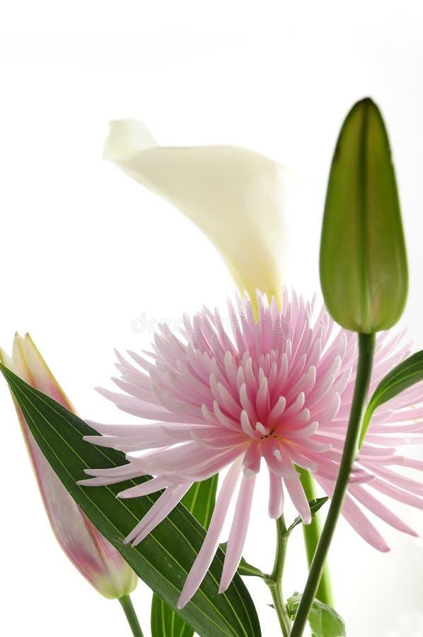 buketten blommar fjädern royaltyfri bild
