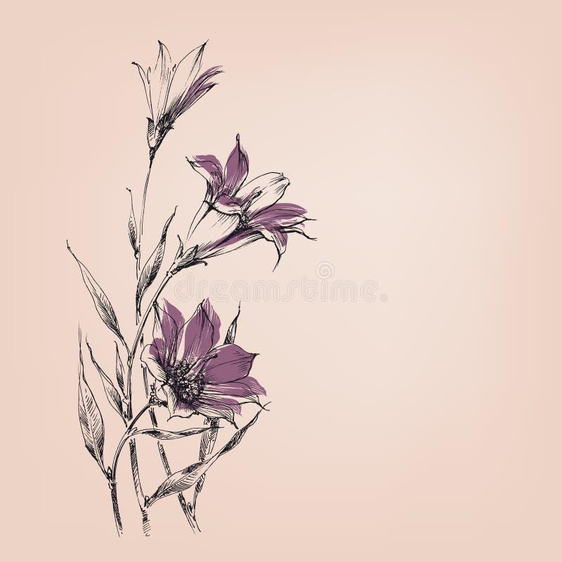 buketten blommar liljan vektor illustrationer