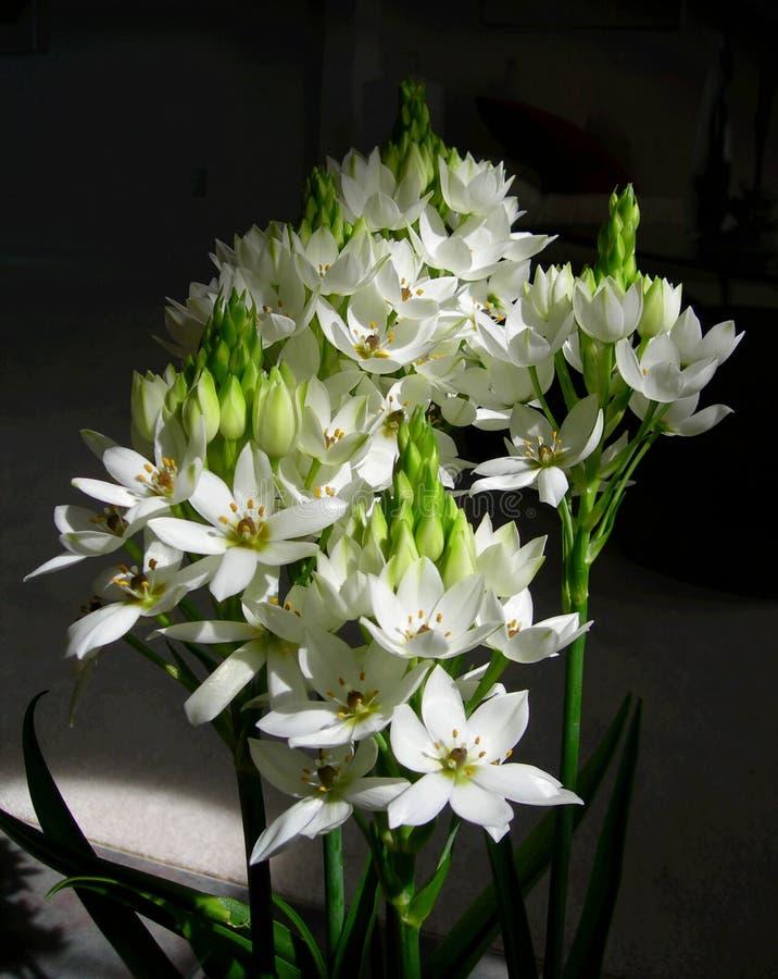buketten blommar white fotografering för bildbyråer
