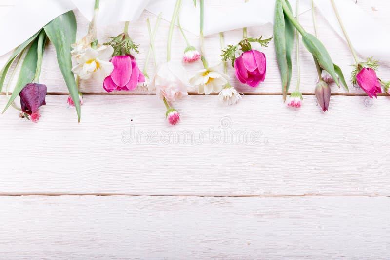 Buketten fjädrar först blommor, rosa färger, purpurfärgade tulpan, påskliljor och tusenskönor på vit träbakgrund fotografering för bildbyråer