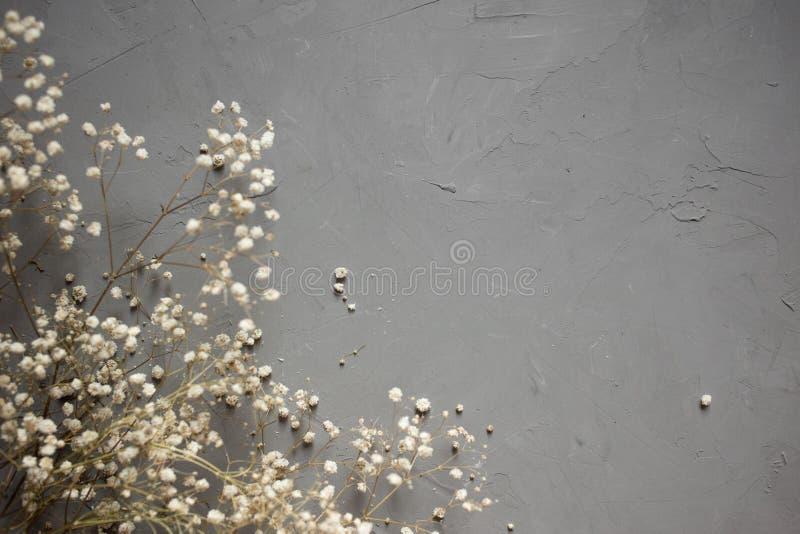 Buketter av en vit torr gypsophilablomma på grå bakgrund Top beskådar royaltyfri foto