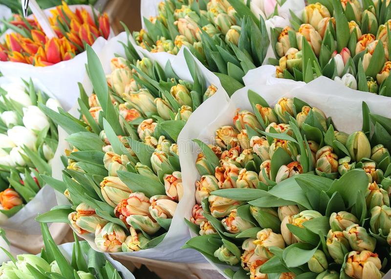 Buketter av orange tulpan i Amsterdam  royaltyfri bild