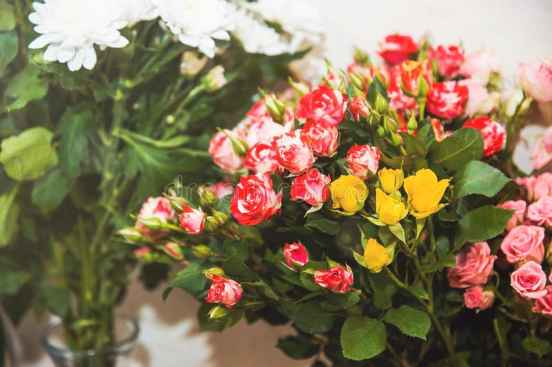 Buketter av röda, rosa och gula mycket små vita blommor för rosor och royaltyfria bilder