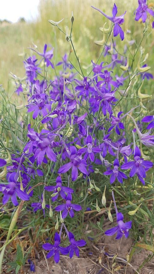 bukettfältet blommar violeten royaltyfria bilder