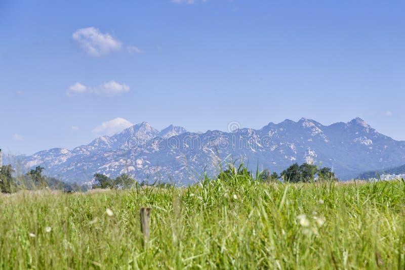 Bukhan góra nad srebną trawą segregującą obrazy royalty free