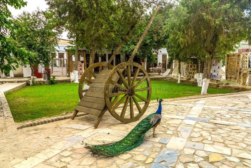 Bukhara gammal stad 82 royaltyfri fotografi