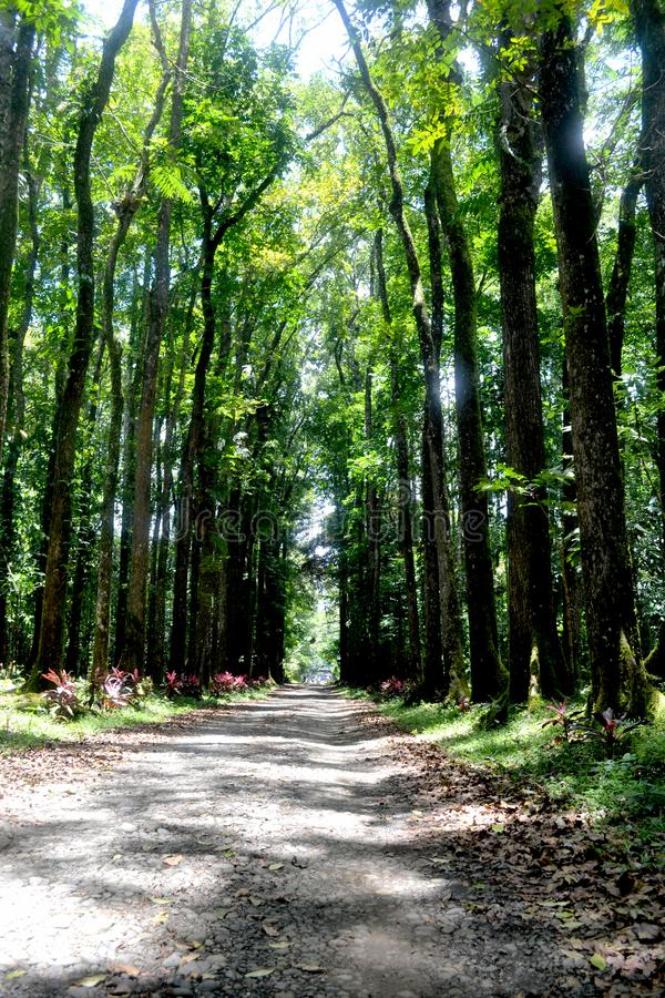 Bukidnon tur royaltyfria foton