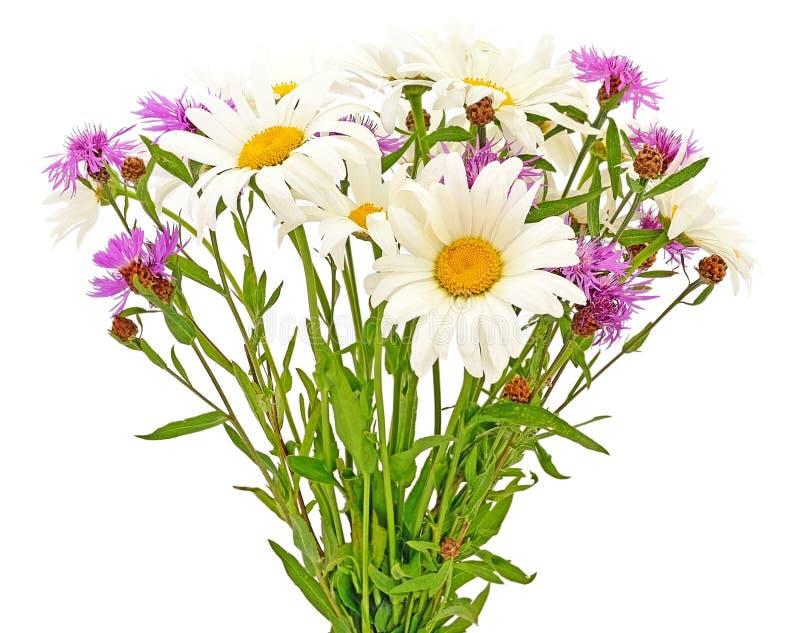 Bukietów cornflowers i chamomiles zdjęcie royalty free