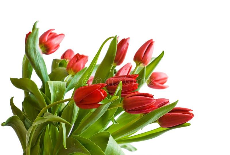 Download Bukietów tulipany zdjęcie stock. Obraz złożonej z tulipan - 13327894