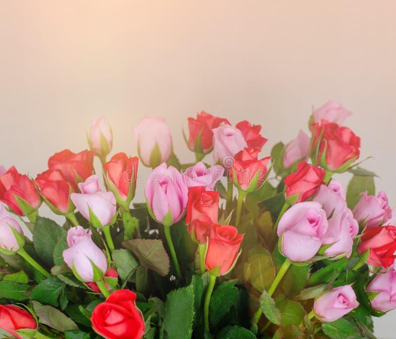 Bukiet śliczne czerwone i różowe róże Delikatny bukiet dla kobiety zdjęcie stock