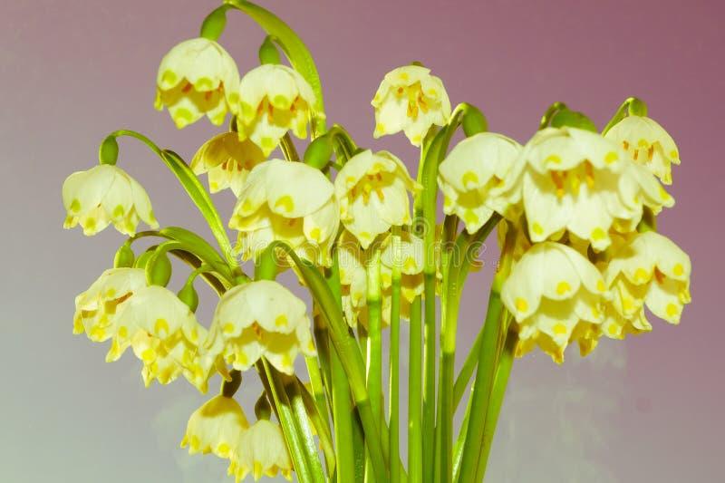 Bukiet śnieżyczki wiosny kwiaty obrazy stock