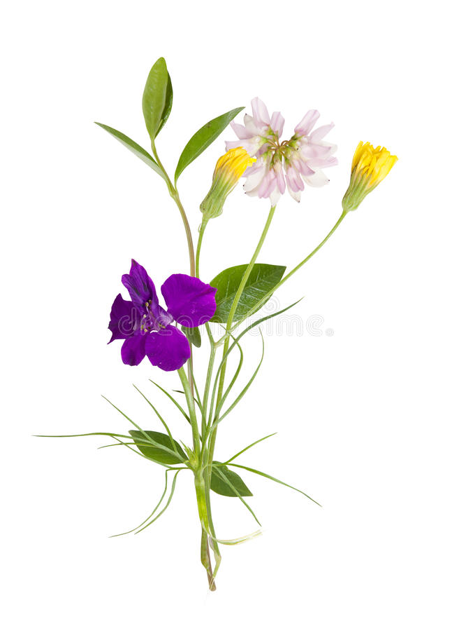 Bukiet śródpolni dzicy kwiaty, Easter barwi, odizolowywał, zdjęcia royalty free