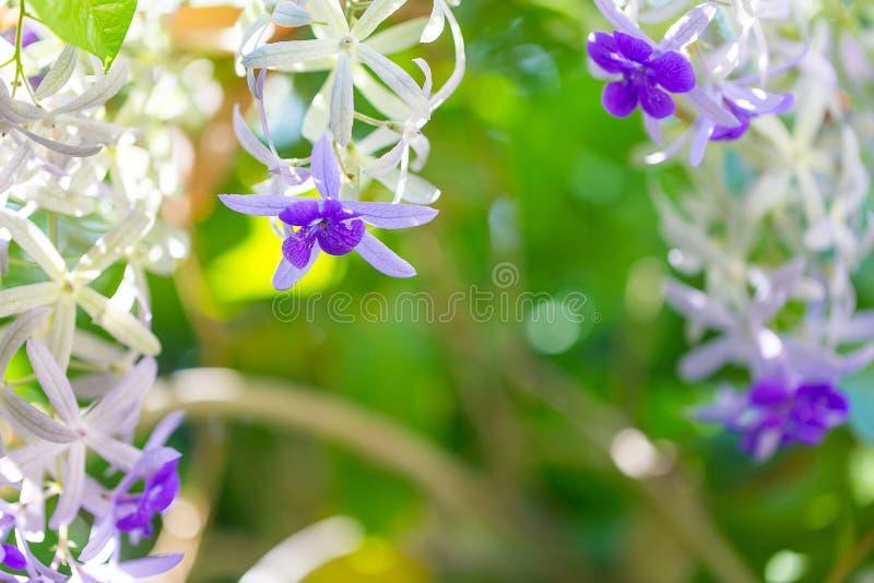 Bukiet śródpolni fiołkowi kwiaty Piękny naturalny kwiatu pojęcie obraz stock