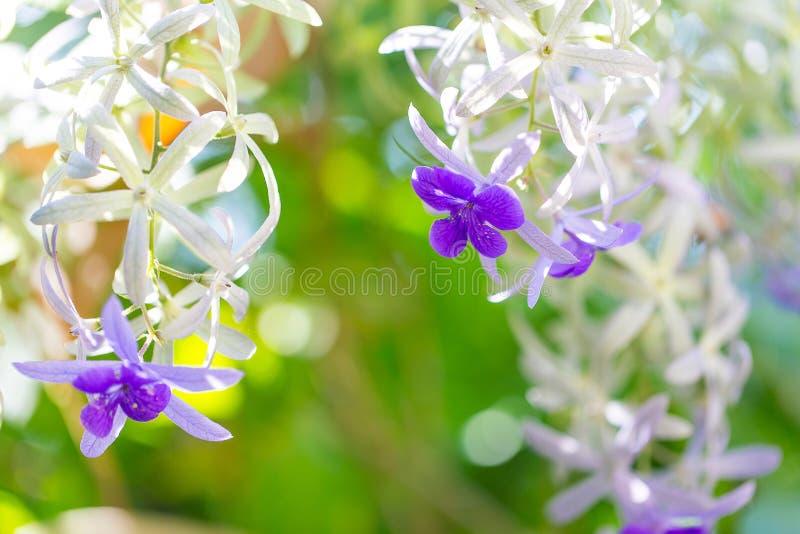 Bukiet śródpolni fiołkowi kwiaty Piękny naturalny kwiatu pojęcie obraz royalty free