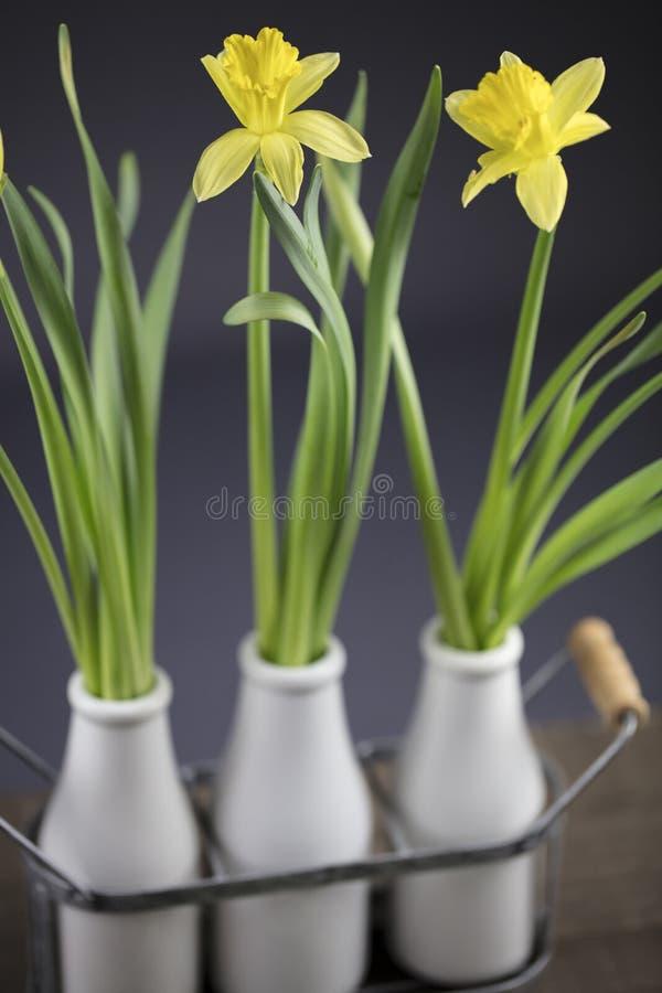 Bukiet żółci daffodils obraz stock