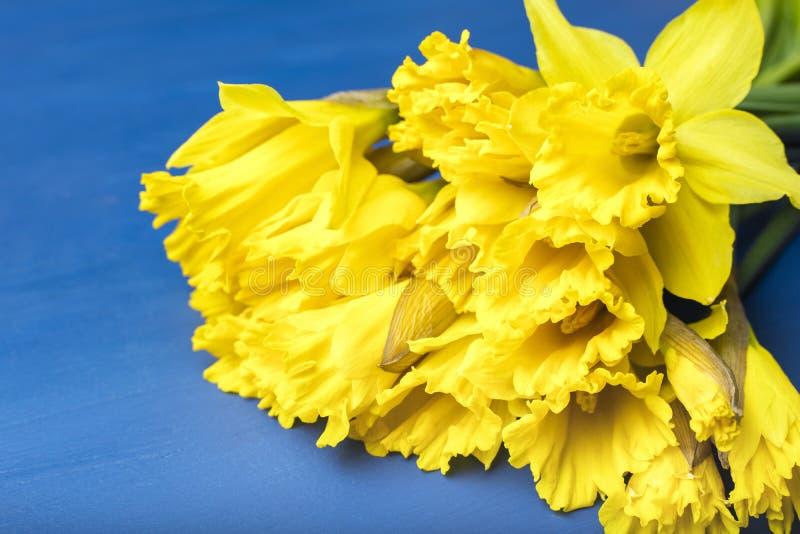 Bukiet żółci daffodils na lekkim tle Kwitnąć kwiaty obraz stock