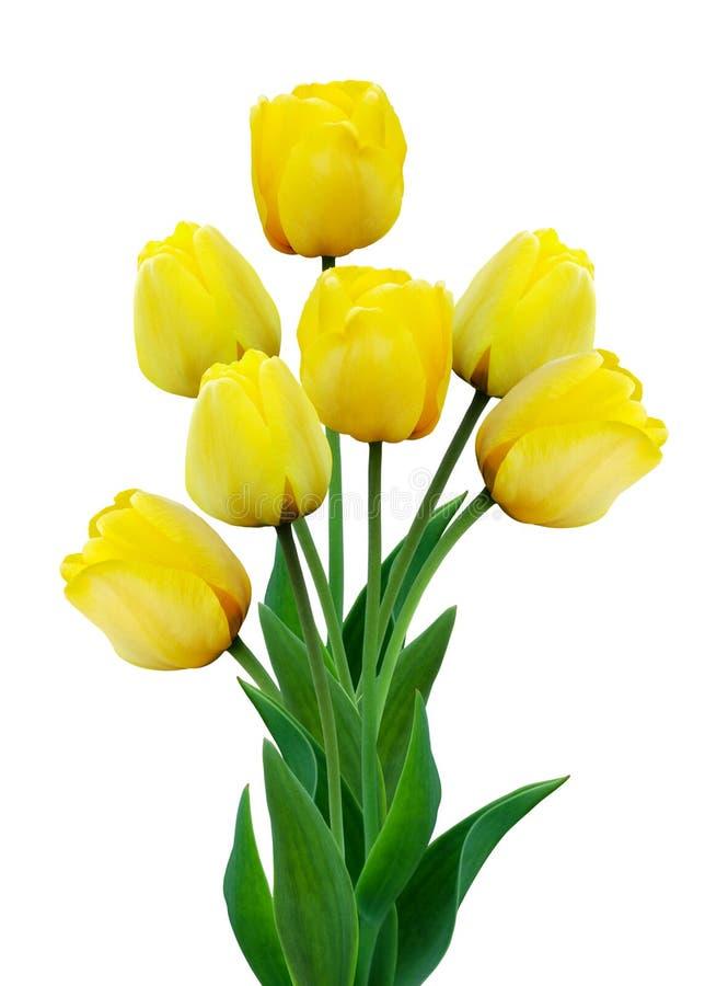 Bukiet żółci tulipany odizolowywający na białym tle zdjęcie stock