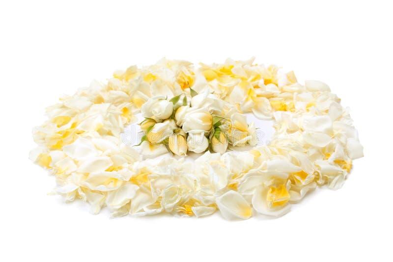 Bukiet żółte róże i różani płatki zdjęcie royalty free