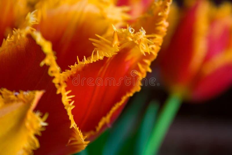 Download Bukiet obraz stock. Obraz złożonej z kwiaty, purpury - 13340777