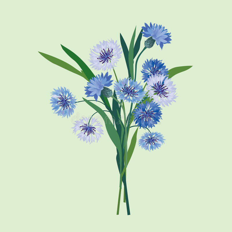 Bukiet błękitny cornflower ilustracji