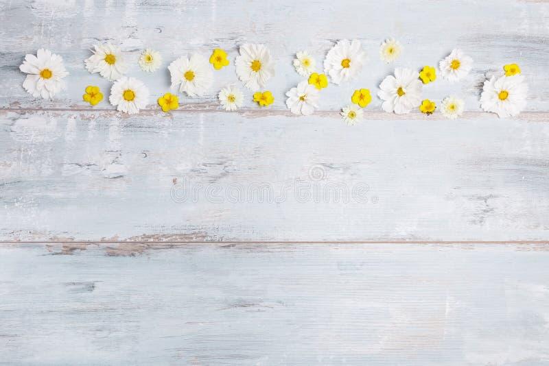 Bukiet białych kwiatów kosmos z faborkiem na białych deskach lub cosmea Ogrodowy kolor żółty kwitnie nad handmade drewnianym stoł obraz royalty free