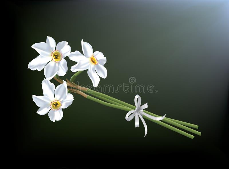 Bukiet biali daffodils ilustracja wektor
