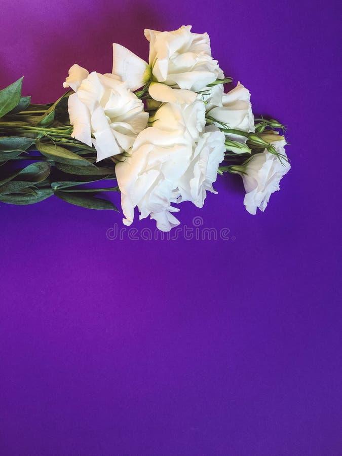 Bukiet biali kwiaty na fiołkowym tle fotografia stock