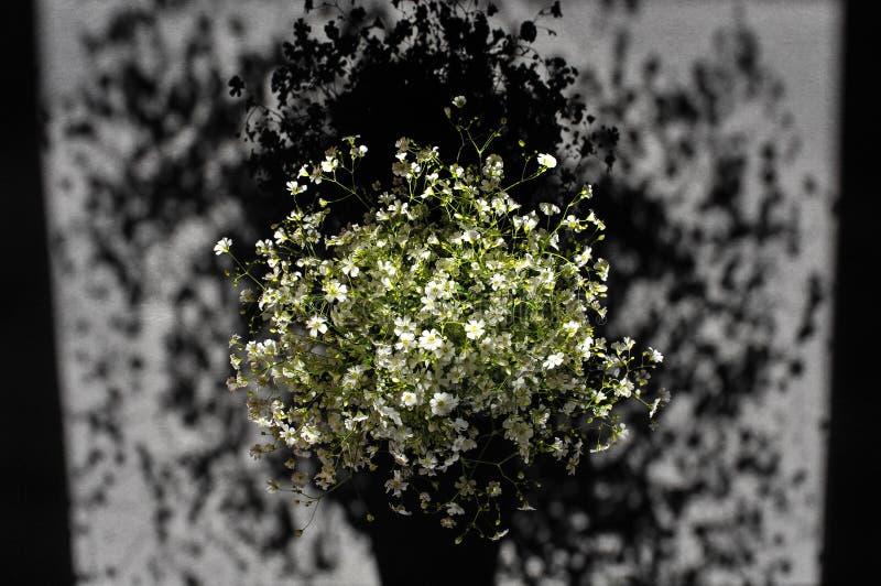 Bukiet biali rumianków kwiaty, światło słoneczne i cień, makro-, obraz royalty free