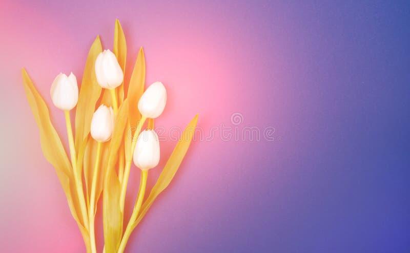 Bukiet biali tulipany na zmroku - błękitny tło Ten karta jest stosowna dla mężczyzny zdjęcie stock