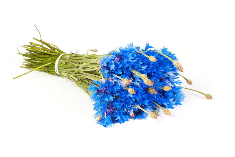 Bukiet cornflowers fotografia royalty free