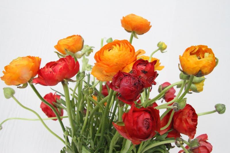 Bukiet czerwień i pomarańcze kwitnie przeciw bielowi fotografia stock