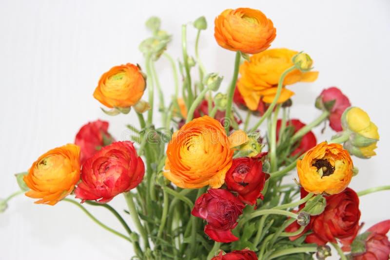 Bukiet czerwień i pomarańcze kwitnie przeciw bielowi zdjęcia stock