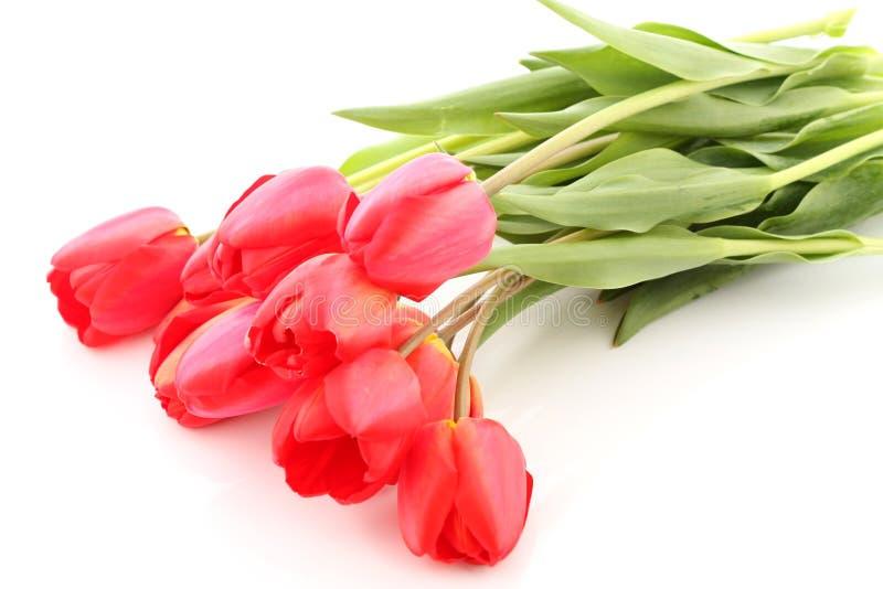 Bukiet Czerwoni Tulipany Obrazy Stock
