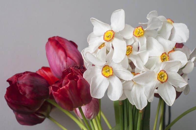 Bukiet daffodilów i tulipanów obraz royalty free