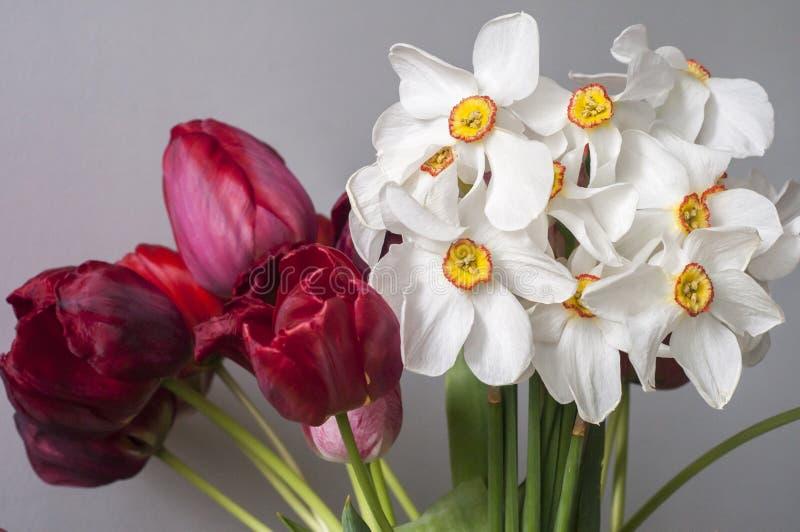 Bukiet daffodilów i tulipanów obrazy royalty free