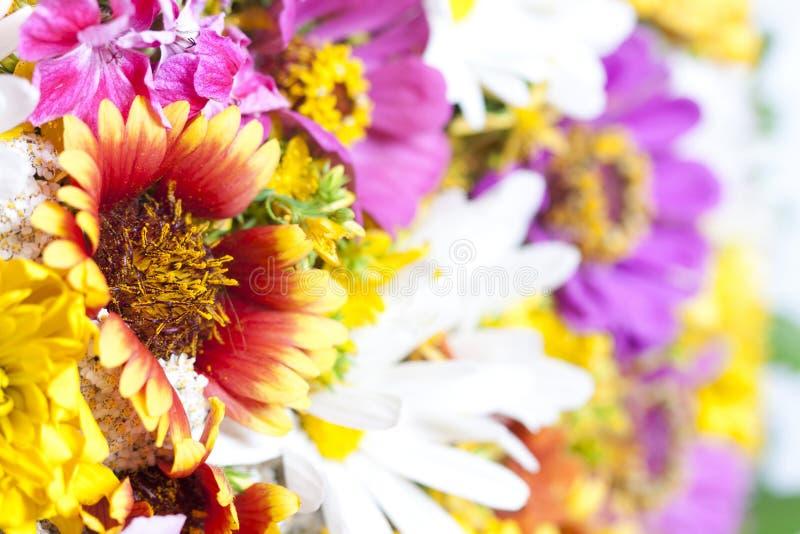 Bukiet dzicy kwiaty zdjęcia royalty free