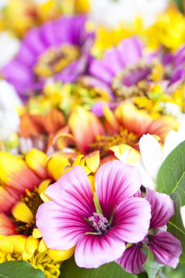 Bukiet dzicy kwiaty obrazy royalty free