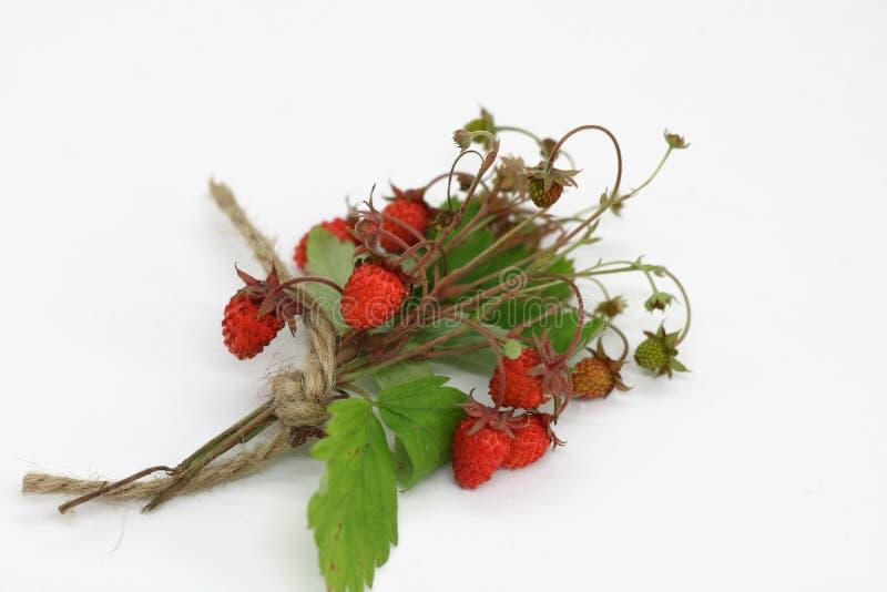 Bukiet dzikiej truskawki jagody w górę obrazy royalty free