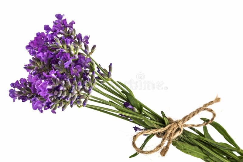 Bukiet fiołkowa dzika lawenda kwitnie, wiązał z łękiem, odizolowywającym obraz stock