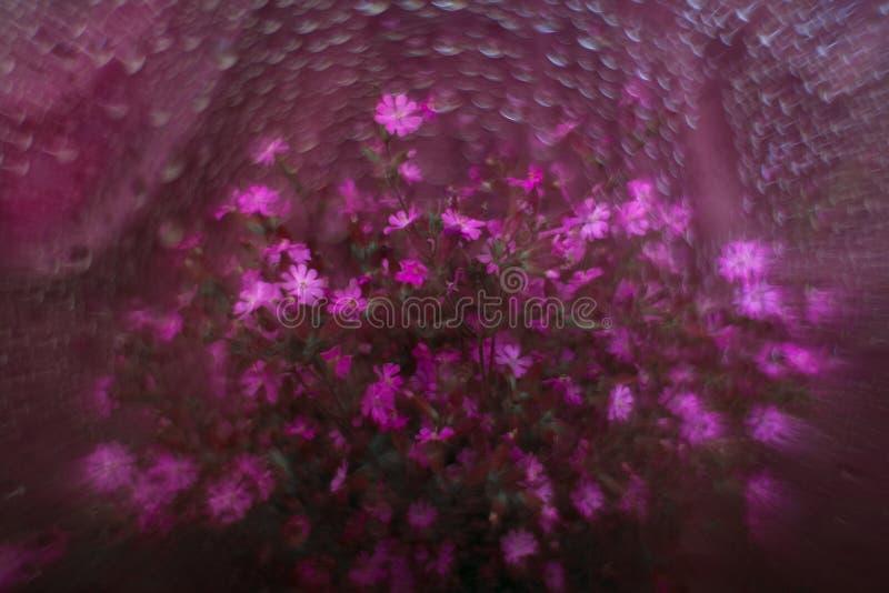 Bukiet fiołkowi kwiaty obraz stock
