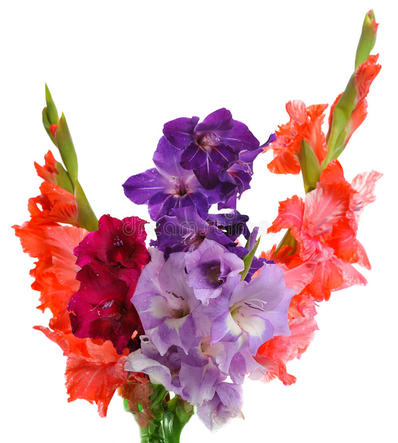 Bukiet gladioluses zdjęcie royalty free