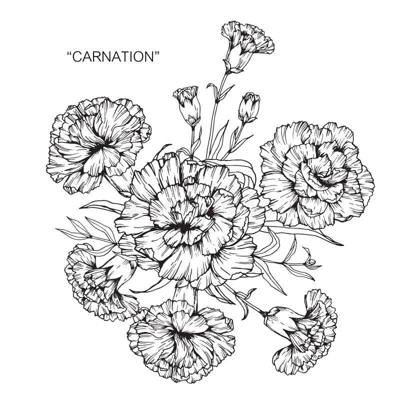 Bukiet goździka kwiatu nakreślenie i rysunek ilustracja wektor