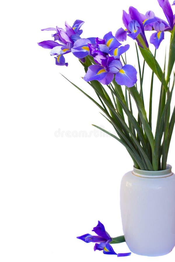Bukiet irysów kwiaty zdjęcia royalty free